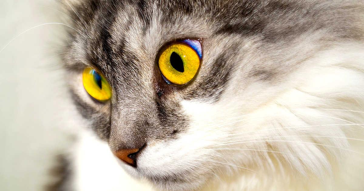 Un minuto di concentrazione neglio occhi di un gatto
