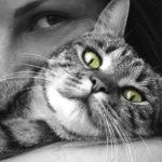 Storia di una ragazza con in braccio un gatto dagli occhi verdi.