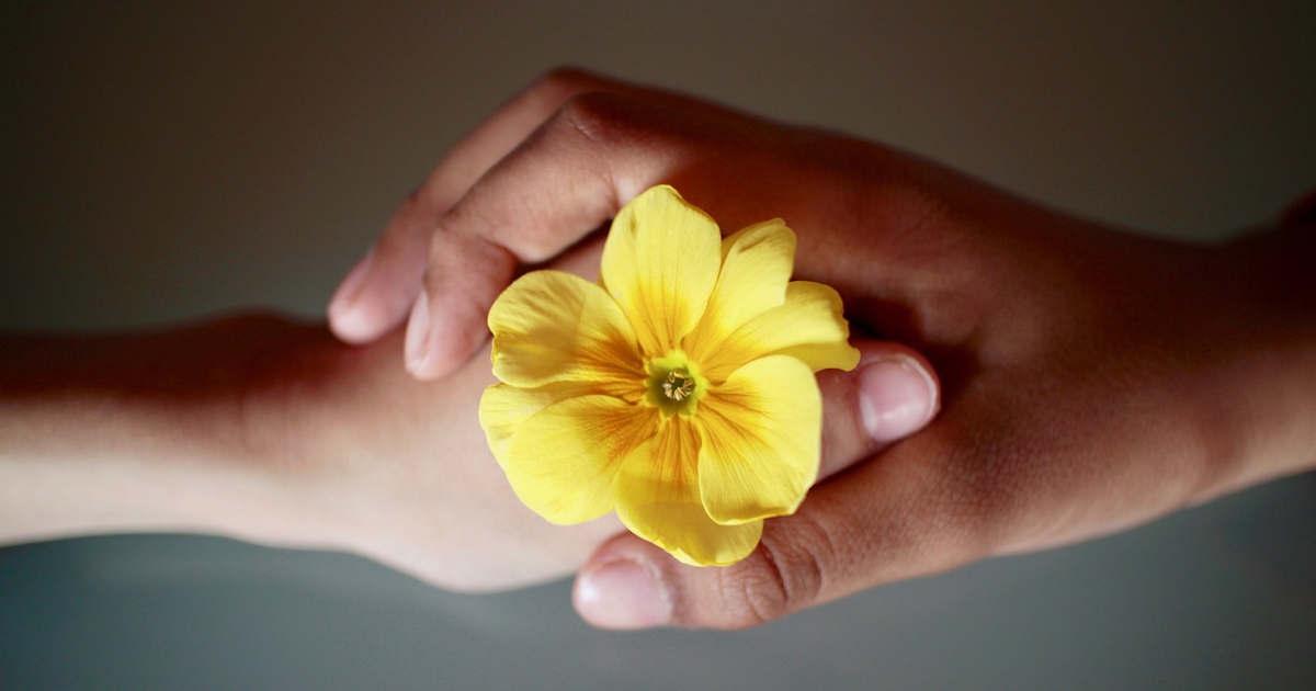 Due mani che si incontrano stringendo un fiore giallo